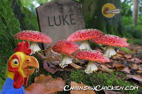 90210 Mushroom Feeder